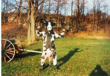 Holloween Cow