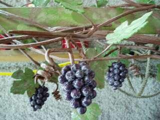 Grape sign