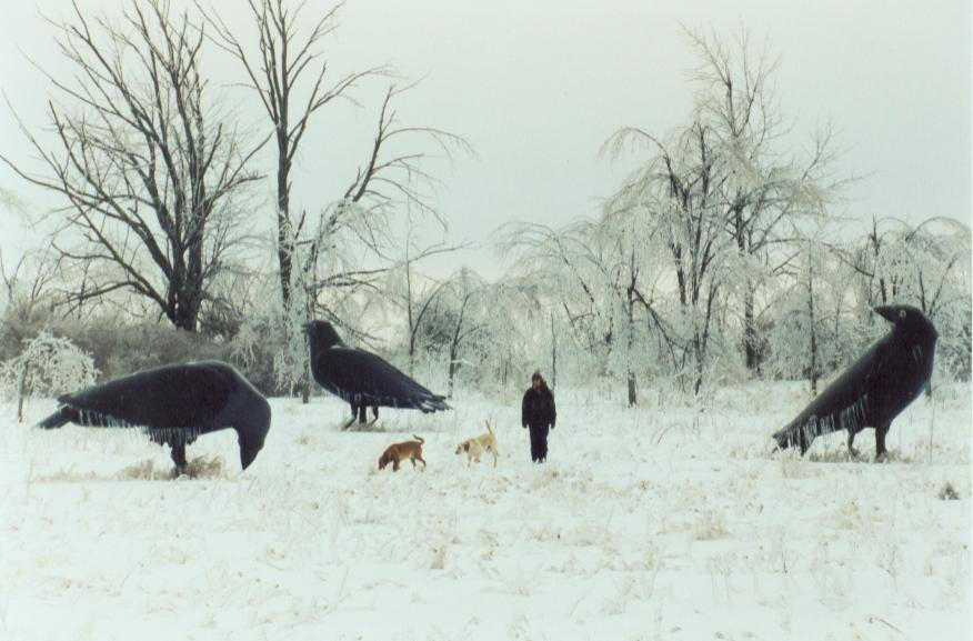 Ice Storm Crows, with Karen and the puppys