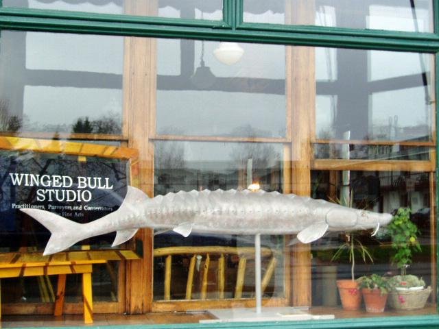 Sturgeon, Winged Bull Studio