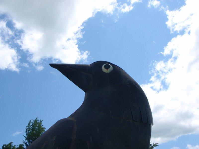Sky Crow
