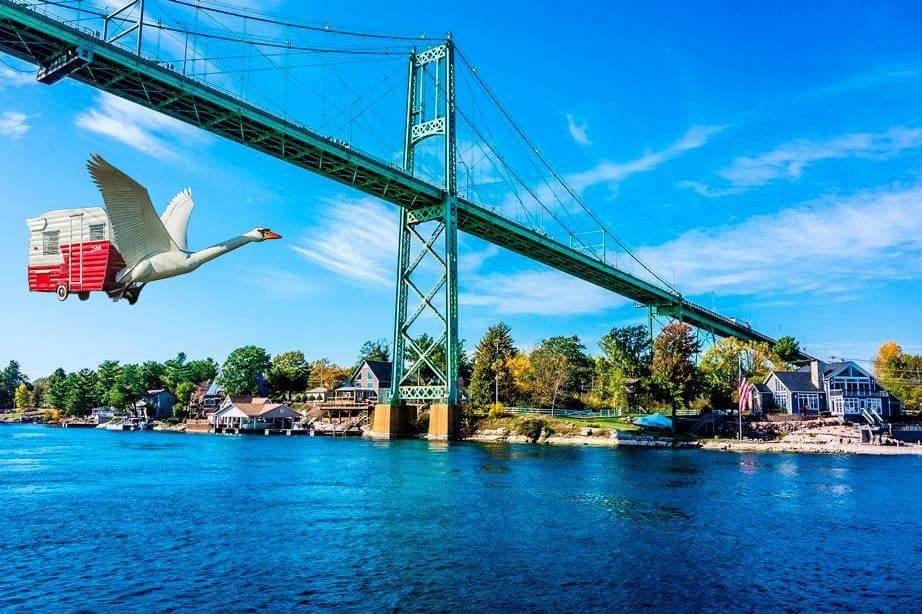 Swan under T I bridge 2