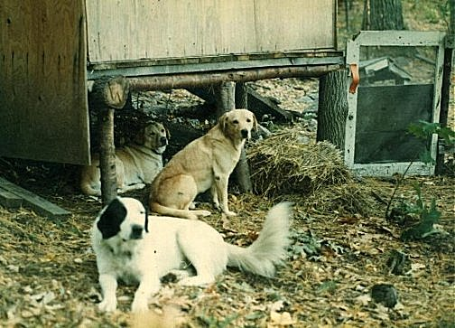 Spot, Spot and Abbie 1977