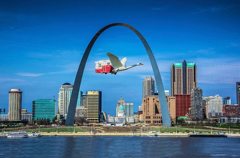 Swan under St Louis Arch